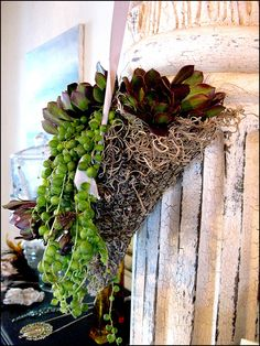 succulent-potted-plants_1471