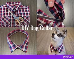 DIY Dog Collar - Trim the collar off a child-sized button-down shirt to make a fun, fancy DIY collar accessory for your pup. Positive Dog Training, Training Your Puppy, Training Dogs, Diy Dog Collar, Pet Collars, Shirt Collars, Old Shirts, Dog Shirt, Dog Behavior