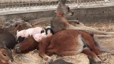 Take a Break at the Petting Zoo