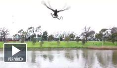 Un halcón deja caer una serpiente viva en una barbacoa familiar