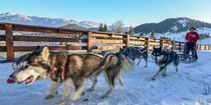 Revelion 2018 la Cheile Gradistei Resort Fundata de 3 stele New Year Holidays, Beautiful Places, Dogs, Animals, Animales, Animaux, Doggies, Animal, Animais