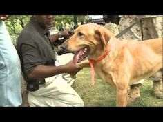 Have you ever seen a working dog in action?
