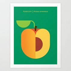 Fruit: Apricot Art Print by Christopher Dina - $22.00