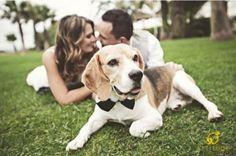Sesión de fotos de boda con perro portando un lindo moño en color negro