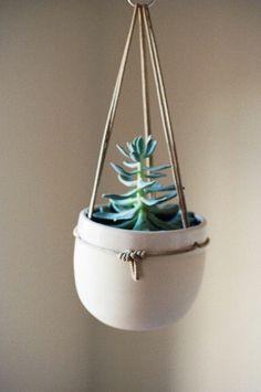 blumenampel topfpflanzen sukkulenten zimmerpflanzen hängend