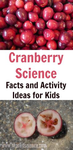 Science facts and activity ideas about cranberries! A great way to keep kids and students interested and engaged in science over the holidays. Steam Activities, Science Activities For Kids, Stem Science, Science Facts, Preschool Science, Food Science, Science Experiments Kids, Science Lessons, Kitchen Science