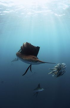 Underwater world -