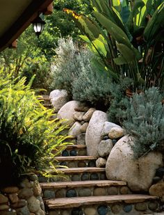 Laguna Beach Garden—Fragrant lavender greets visitors who climb flagstone and river rock steps bordered by boulders.