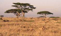 Tanzania has many sights to behold, especially the majestic Serengeti, and perilous Mount Kilimanjaro. Make Tanzania your next adventure! Pillars Of Eternity, The Great Migration, Tanzania Safari, Les Continents, Diorama, Out Of Africa, Biomes, African Safari, Thalia