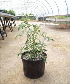 Hydroponics and Plant Testing