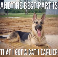 Oh how true!  I bath my dogs and they find the dirt and mud immediately after!