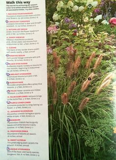 "BHG ""Walk this way"" all-season color   For ZONE 4a (Minneapolis, MN)   lanceleaf coreopsis, maestro sedum, black-eyed susan, limelight hydrangea, Russian safe, phlox, purple coneflower, ninebark, unique hydrangea"