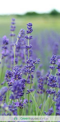 Beautiful Flowers #flowers #gardening #photography #photooftheday #gardens #beauty #amazing #gardens #backyard #beauty #cute #flower #plants #blue #pink #red #green
