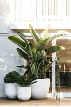 And videos indoor plants, pool plants, balcony plants, balcony garden, gard Outdoor Pots, Outdoor Living, Large Outdoor Planters, White Planters, Large Garden Pots, Small Outdoor Spaces, Modern Planters, Large Pots, Concrete Planters