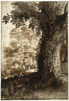 Claude Lorrain, study of an oak tree, Black chalk with pen and Brown ink and Grey-brown wash, late 1630s. The British Museum.