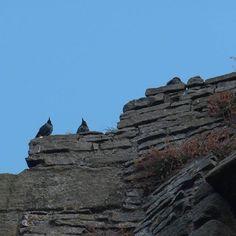 @EnglishHeritage #middleham #castle