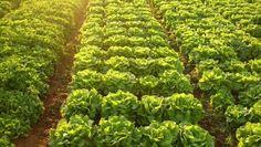 Puerto Rico apuesta a la juventud para impulsar la agricultura