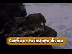 Para el Pedro Gaviota que todos Somos - YouTube