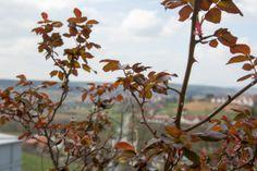 Der Steirerhof Bad Waltersdorf – Luxus, Entspannung, Wellness, Therme, Österreich Bad, Plants, Pictures, Luxury, Landscape, Vacation, Plant, Planets
