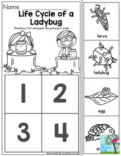 Life Cycle of a Ladybug- This one is sure to be a favorite preschool activity, especially if you incorporate it into a garden lesson and release the ladybugs into the garden!