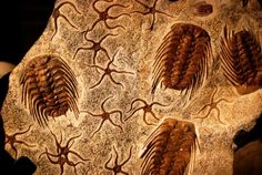 Researchers in the USA and Japan say they may have found the cause of the first mass extinction of life.