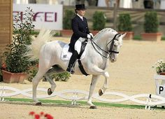 EUROPEAN DRESSAGE CHAMPIONSHIPS 2007  Alexandra Korelova   Balagu   Orlov trotter - these mainly grey horses are bred to work in front of a carriage, later to race. One horse, however, has changed the image of the Orlov trotter by rising to stardom in the Olympic dressage arena: Balagur.