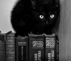 kitty cat love photography pretty art animals Black and White eyes Halloween lovely dark wow books The End emo scene gothic pastel goth Black Cat kawii