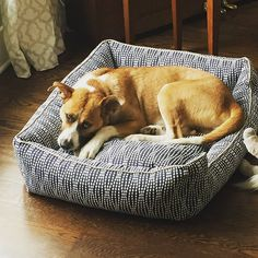 Would you want to leave your new bed? Our furry friend doesn't want to either! #dogsofTHM #dogfriendly #THMathome #Milwaukee #Madison #dog