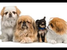 How To Choose a Puppy: Tips on How to Pick a Puppy. Check out this helpful video from Howdini!