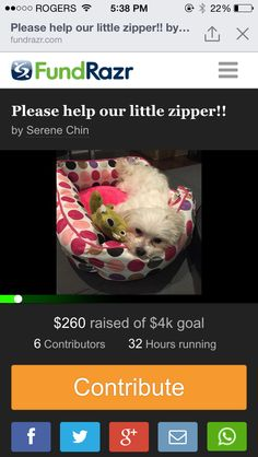 Please help our little zipper gets better : https://fundrazr.com/campaigns/1ynw3?psid=f2b679357baa45cbb6e28b3f22bb5989&fb_ref=share__54jRO0