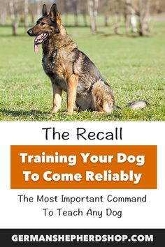 The Recall Training Your Dog To Come Reliably German Shepherd, german shepherds, german shepherd training, german shepherd training tips German Shepard Training, German Shepherd Facts, German Shepherds, Training Your Dog, Training Tips, Dog Mom Gifts, Dog Hacks, Happy Animals, Dog Boarding