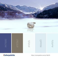 Color Palette Ideas from Nature Snow Winter Image Web Colors, Colours, Color Combos, Color Schemes, Winter Images, Find Color, Winter Colors, Colour Palettes, Color Pallets