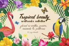 Tropical beauty, png elements. by Barcelona Design Shop on Creative Market
