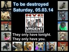 NYCACC DEATHROW DOGS