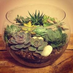 Image result for fish bowl succulent terrarium