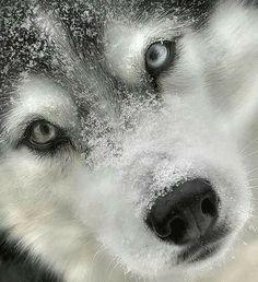 Wolf's winter