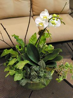 Orchid Centerpiece Container Garden - Great rainy day project - with recipe / Pike Nurseries