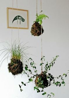 "Make your own moss world (string ball planting): Kokedama Tutorial | Miss Moussetache aka Mimimou    I love this idea.  I think I may try transferring a lot of my herbs into this type of planting when I have a covered patio. Looks like it would be a great way to create a ""living wall"" that will separate space but still leave it airy and fun."