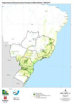 O Atlas dos Remanescentes Florestais da Mata Atlântica, que monitora a distribuição espacial do bioma, identificou a regeneração de 219.735 hectares (ha), ou o equivalente a 2.197 km², entre 1985 e 2015, em nove dos 17 estados do bioma. O estudo analisa principalmente a regeneração sobre formações florestais que se apresentam em estágio inicial de vegetação nativa, ou áreas utilizadas anteriormente para pastagem e que hoje estão em estágio avançado de regeneração.