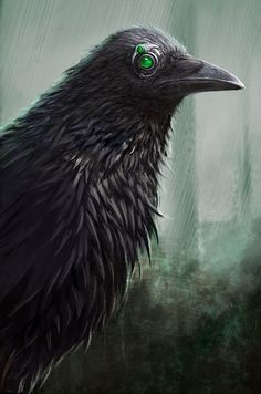 Raven by *darkpaganus on deviantART