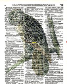Great Gray Owl  Vintage Dictionary Book Page by KFLGetsHerFunkOn