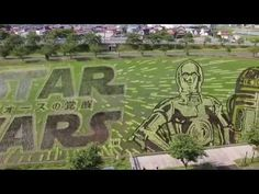 Japanese Village Creates a Beautiful 'Star Wars' Rice Paddy Art Display to Celebrate 'The Force Awakens'