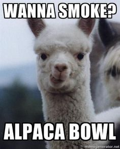 I don't smoke weed, but this is funny!