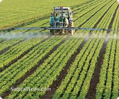 According to a new regulation, the EPA has doubled the amount of glyphosate (Roundup) residue legally allowed on oilseed crops like canola and soy that are intended for human consumption, even though this will create a significant public health hazard. http://www.naturalnews.com/041250_EPA_glyphosate_legal_limits.html