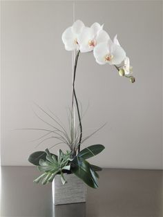The Silver Orchid - a classic white orchid plant with tropical and succulent accents in a silver ceramic. $95
