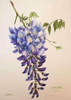 Акварельные Обои, Акварельные Цветы, Акварельные Картины, Цветочный Рисунок, Ботанические Рисунки, Ботанические Принты, Искусство, Старинные Произведения Искусства