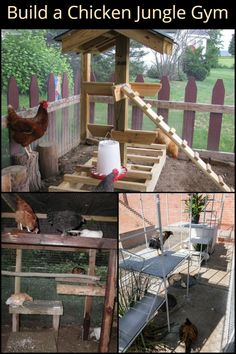Keep your Chooks Happy and Healthy by Making them a Chicken Jungle Gym Cute Chicken Coops, Chicken Coop Run, Diy Chicken Coop Plans, Hen Chicken, Backyard Chicken Coops, Chickens Backyard, Keeping Chickens, Raising Chickens, Chicken Perches