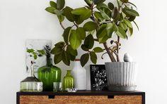 10 лучших быстрорастущих комнатных растений. Список с фото - Ботаничка.ru - Страница 11