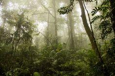 Hablando de bosques, Indonesia tiene algunos hermosos
