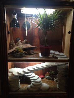 Two-story bearded dragon cage made from a broken dresser :) Great DIY!